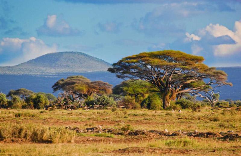 Mau Menikmati Suasana Seperti di Afrika ? Datang Saja ke Taman Nasional Baluran