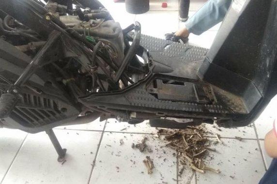Tips Supaya Sepeda Motor Tidak Menjadi Sarang Hewan
